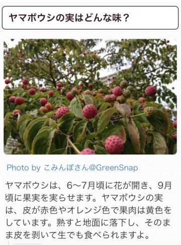 IMG_4174[1]
