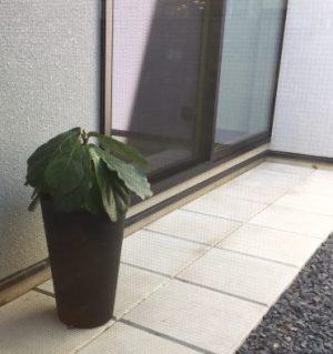 観葉植物 元気ない
