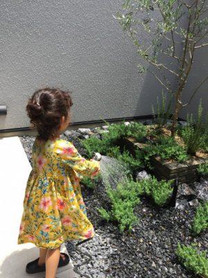 芝生の水やりシーズン